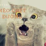 Mèo chết đánh con gì?
